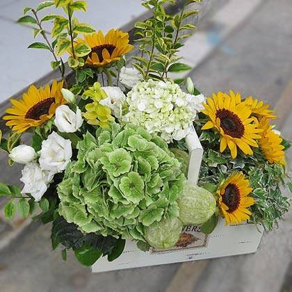 《陽光心情》精緻桌上盆花