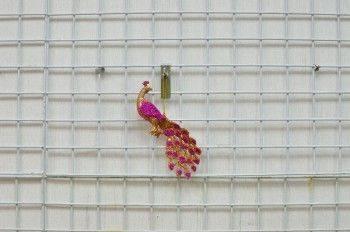 桃紅金孔雀