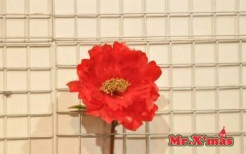 紅色牡丹花