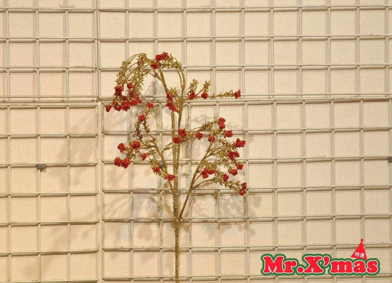 紅珠珠金葉長枝