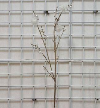 珍珠白球長枝