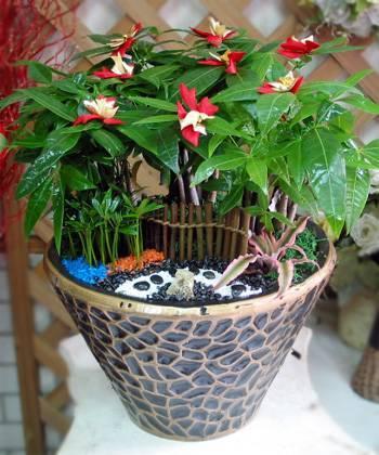 《財氣》馬拉巴栗發財樹桌上盆栽