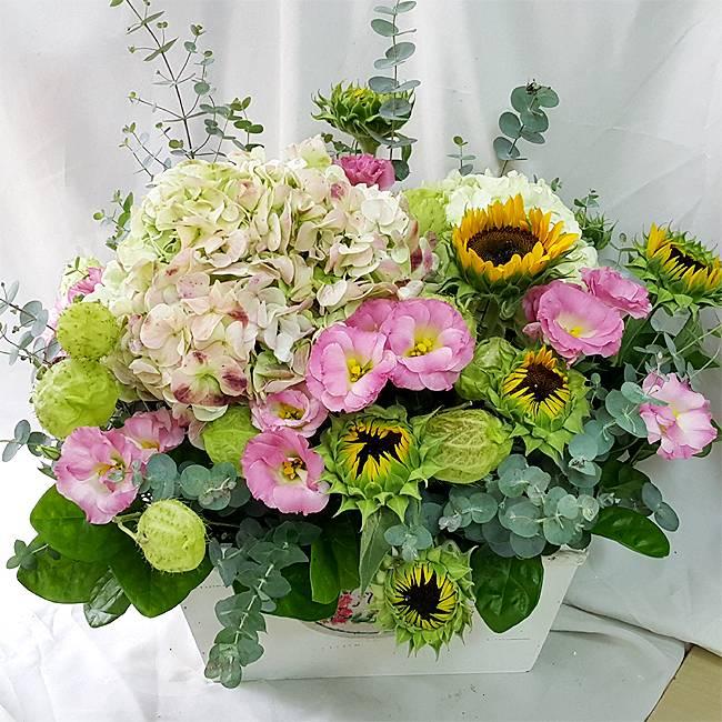 《日日昌》精緻桌上盆花
