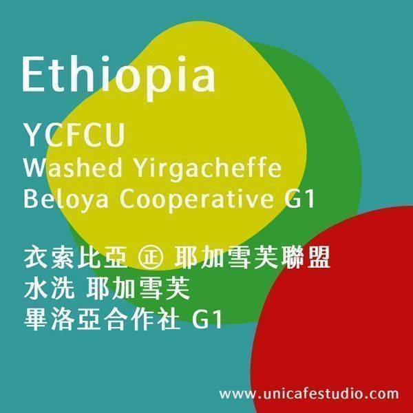 衣索比亞 ㊣ 耶加雪芙聯盟 水洗 耶加雪芙 畢洛亞合作社 G1 2020最新產季