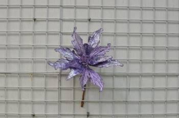 紫色聖誕花--11片葉