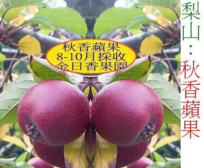 梨山∼秋香蘋果,香∼脆∼甜(產期:每年8月...)