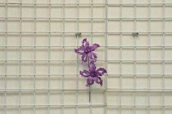 紫色小雙花